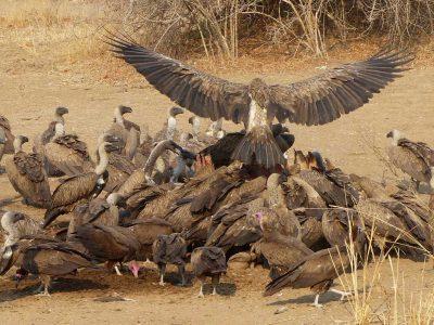 South Luangwa Zambia