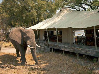 African Sanctuary